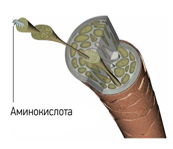 Волос при многократном увеличении: аминокислота в составе волоса