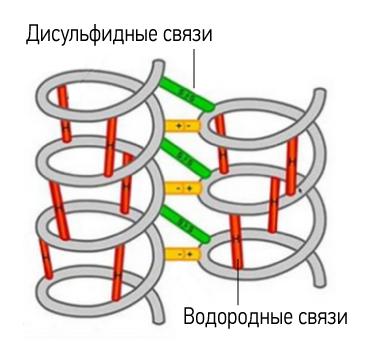 Строение волоса (макро): поперечные связи в структуре волоса